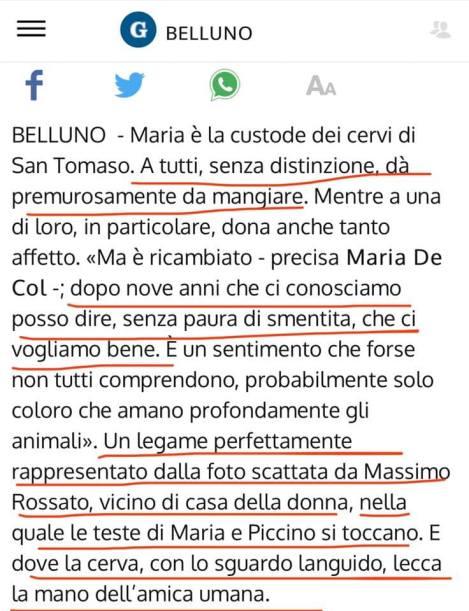 Foto apparsa sulla versione online del Gazzettino.it il 5 febbraio 2020